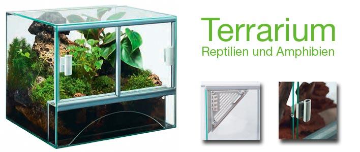 eingerichtetes terrarium für reptilien und amphibien