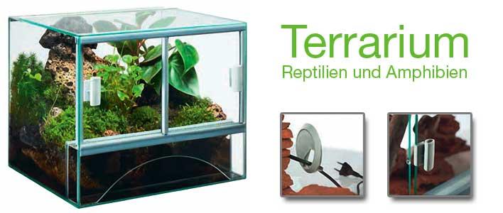 ein eingerichtetes glasterrarium für reptilien und amphibien