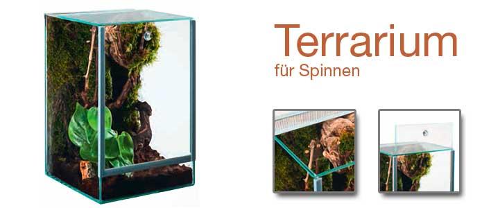 eingerichtetes spinnenterrarium mit lüftungsgitter und falltür