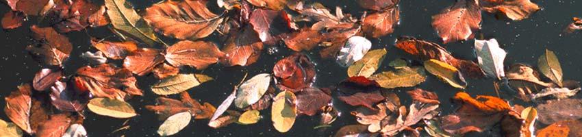 Blätter und Laub auf der Wasseroberfläche eines Gartenteichs