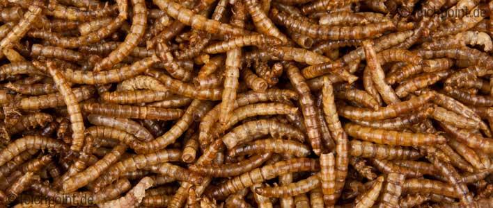 getrocknete Mehlwürmer Nahaufnahme