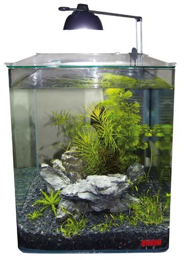 Ein Nano Aquarium mit grünen Pflanzen und dem EHEIM Nano Innenfilter aquaCorner 60