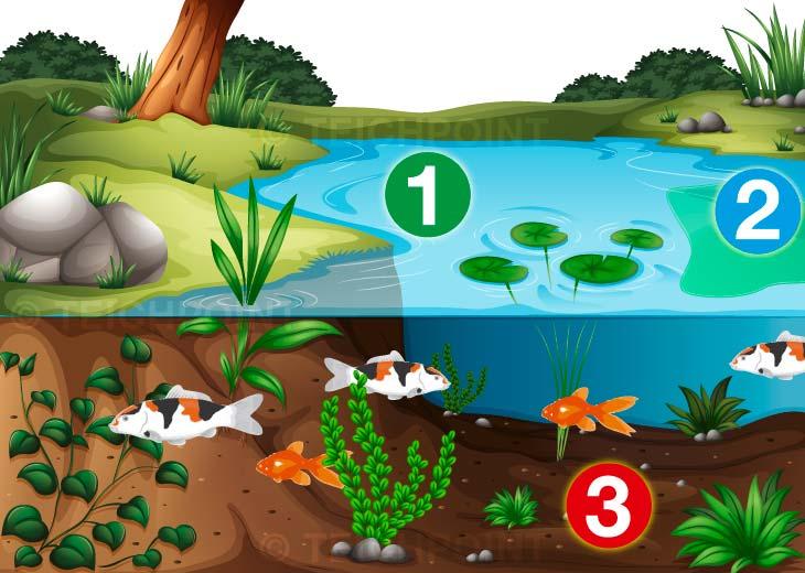 Infografik - In drei Schritten zu einem klaren und schönen Gartenteich