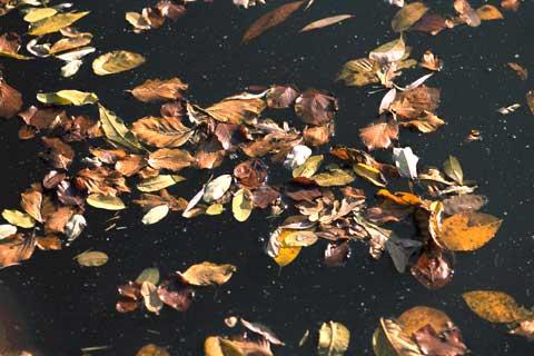 blätter schwimmen auf einer wasseroberfläche