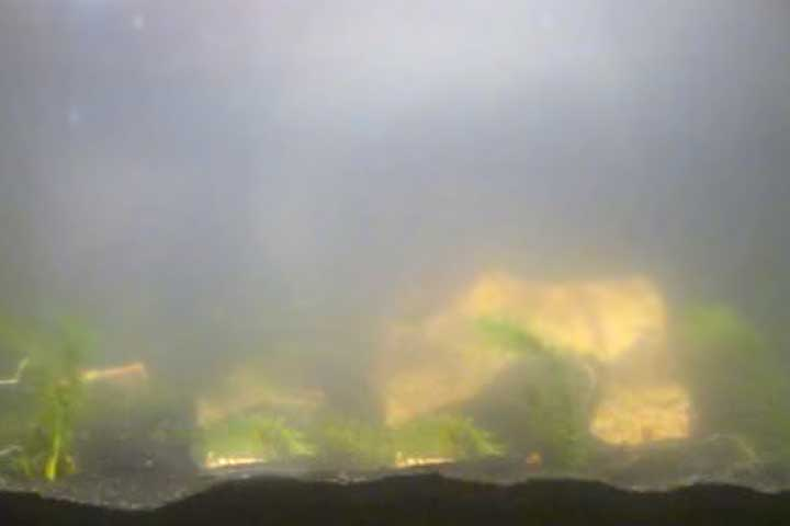 trübes und milchiges aquarium