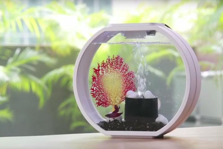 Designer Nano Aquarium für Anfänger und Fortgeschrittene Aquarianer