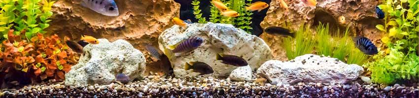 eins suesswasseraquarium mit kies als bodengrund
