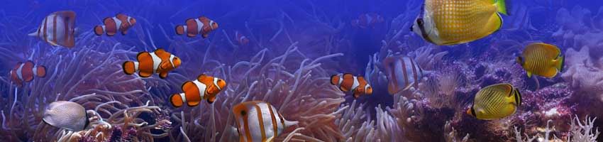 schöne Aquarien dank Aquarium Filtermedien
