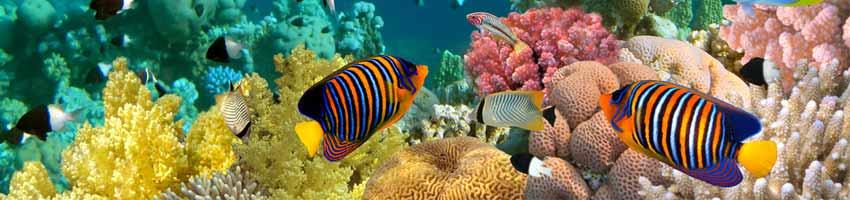 Aquarium Ausströmer