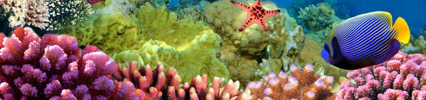 Annemonenfisch im Meerwasseraquarium
