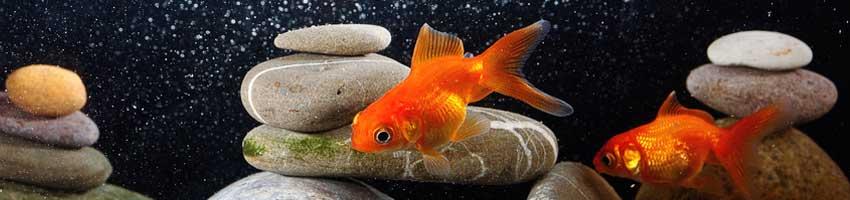 UVC Klärer für Aquarium und Teich