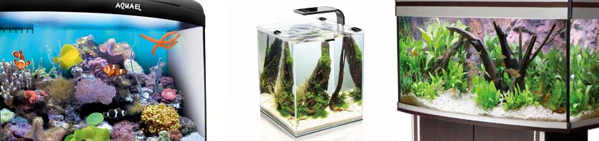 Aquarien aus unserem Aquarium Shop Sortiment
