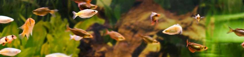 unterwasseraufnahme exotische fische
